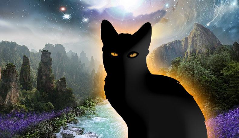 Katzen im Rollenspiel